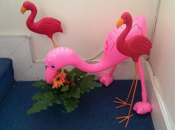 fun-pics-inflatable-flamingo-and-friends